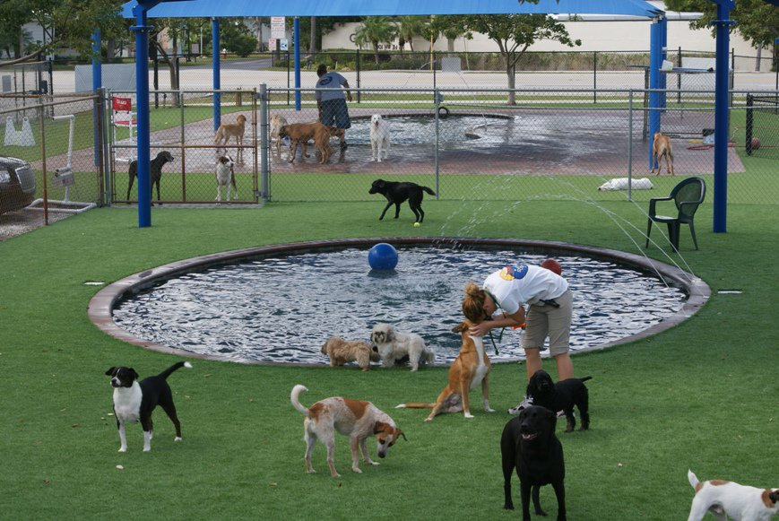 outdoor dog play space